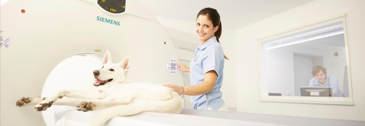 CT für Tiere