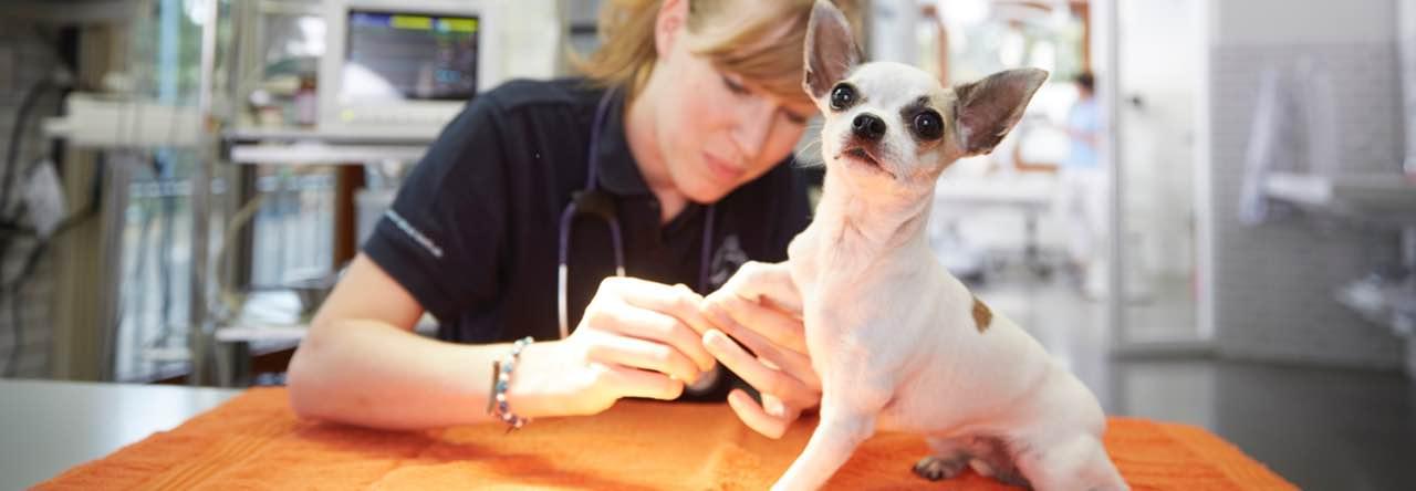 Behandlung in der Tierklinik durch einen Tierarzt