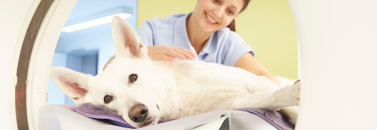 Hund im CT