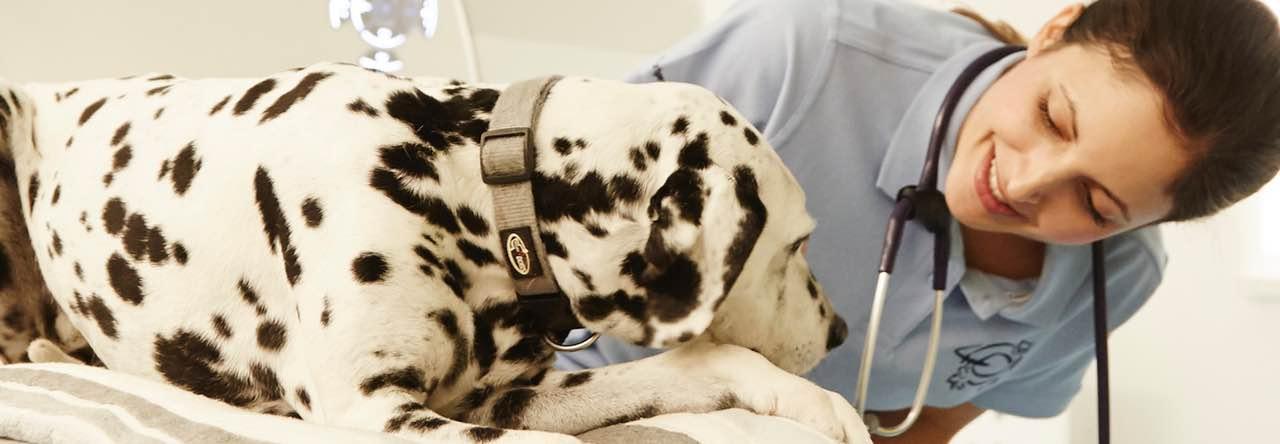 Behandlung und Psychotherapie in der Tierklinik Kellerwessel Köln